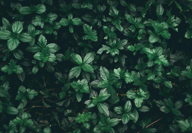 nature awakes blätter